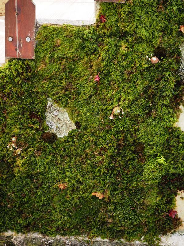 joli mur du Bocage chambres d'hôte à Sorbais Aisne 02 Picardie